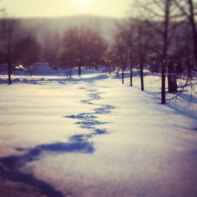 Polish winter